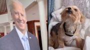 Biden, Dog